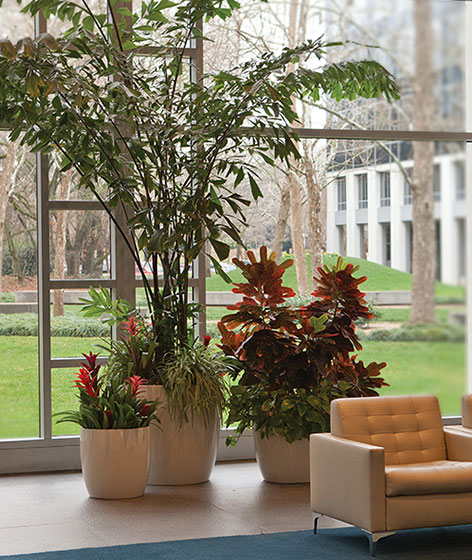 Interior Plants The Growing Company